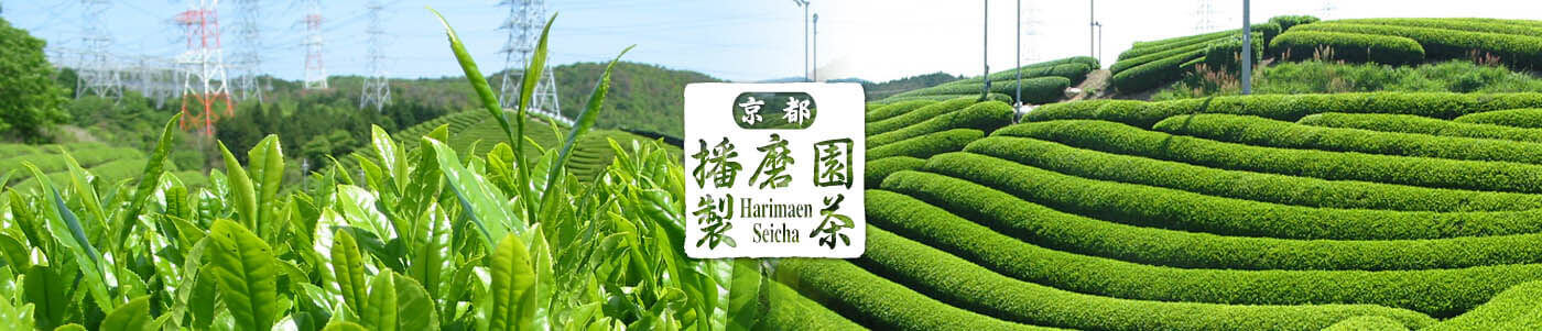 About Harima Garden's Tea Manufacturing